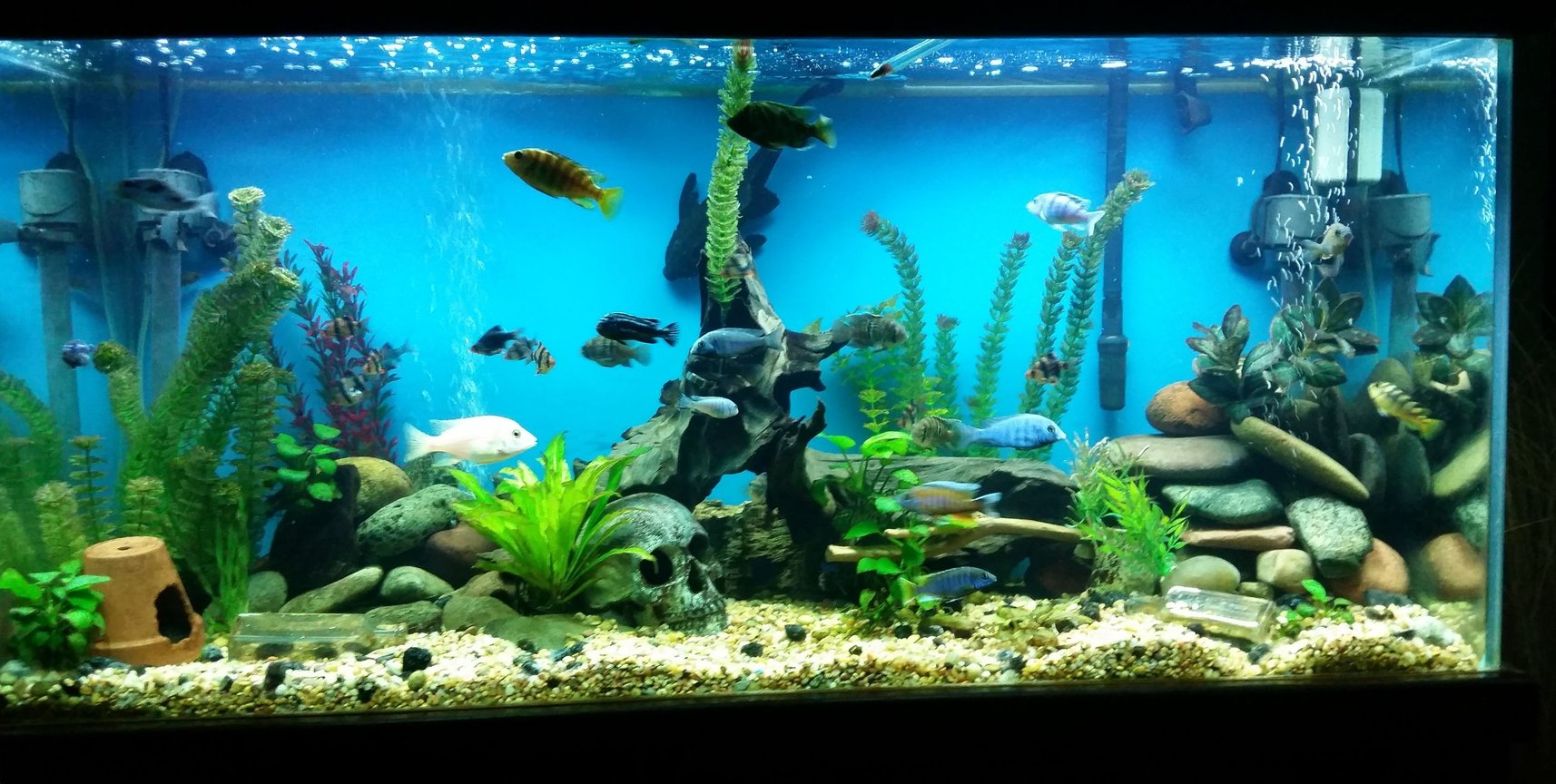 90 gallons freshwater fish tank (mostly fish and non-living decorations)