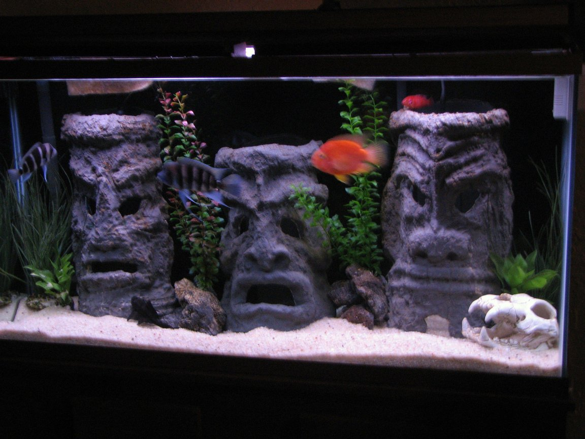 60 gallons freshwater fish tank (mostly fish and non-living decorations) - 60 gallon tall with homemade tiki men, made from cement and pvc