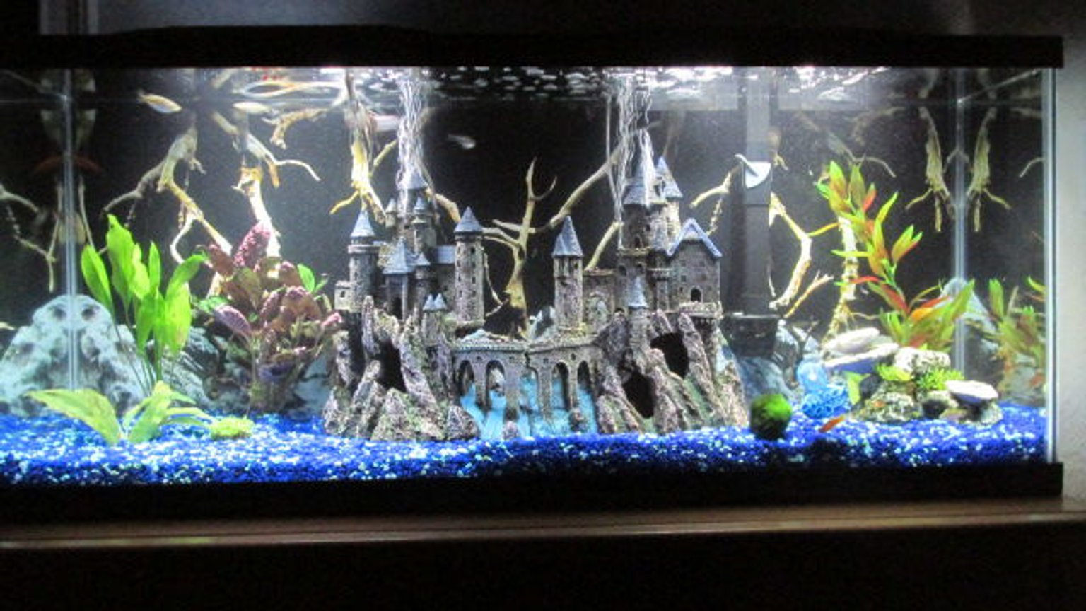 60 gallons freshwater fish tank (mostly fish and non-living decorations) - Castle community tank.