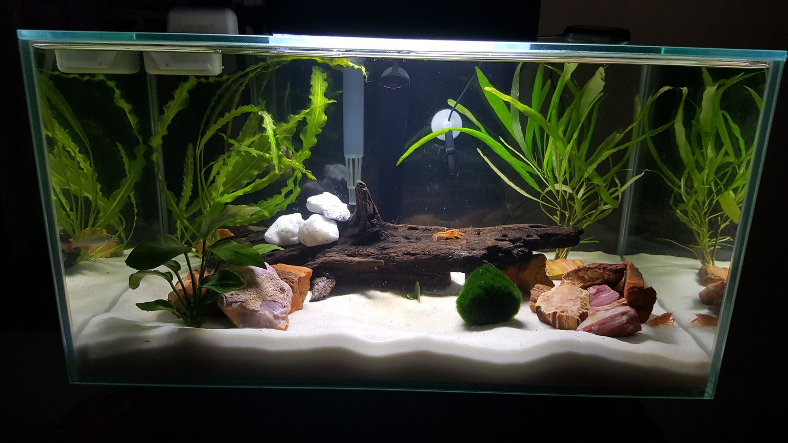 6 gallons freshwater fish tank (mostly fish and non-living decorations) - 6 Gallon - newbie to the hobby