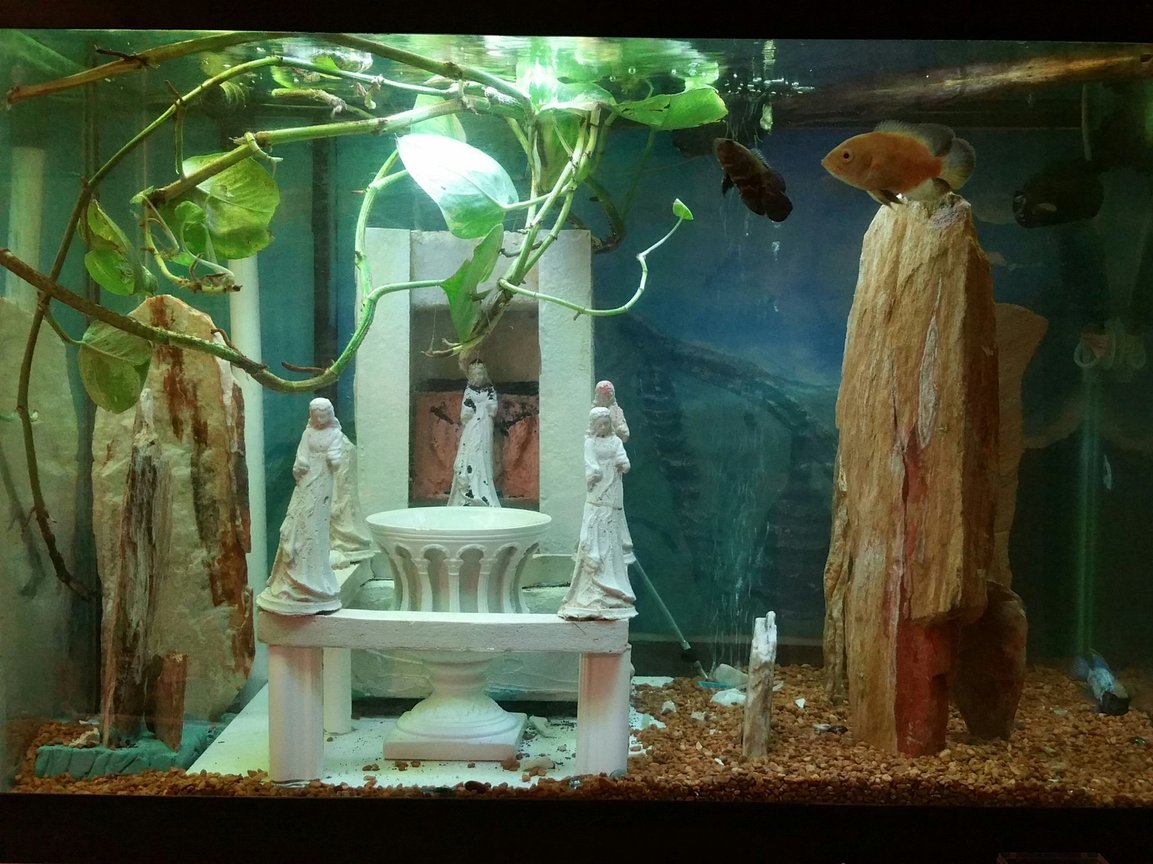 55 gallons freshwater fish tank (mostly fish and non-living decorations) - Freshwater 55 gal handmade decorations mount olympus decorated theme live vines plants co2 and sandfall tower