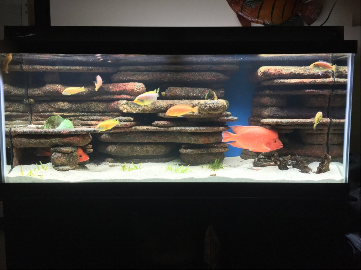 75 gallons freshwater fish tank (mostly fish and non-living decorations) - Blue led with fluorescent