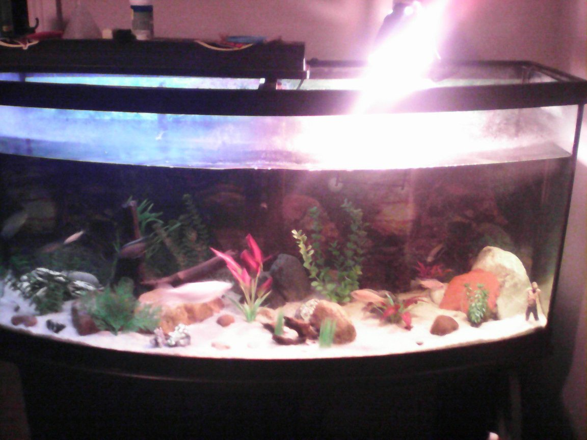 70 gallons freshwater fish tank (mostly fish and non-living decorations) - Sorry for the quality