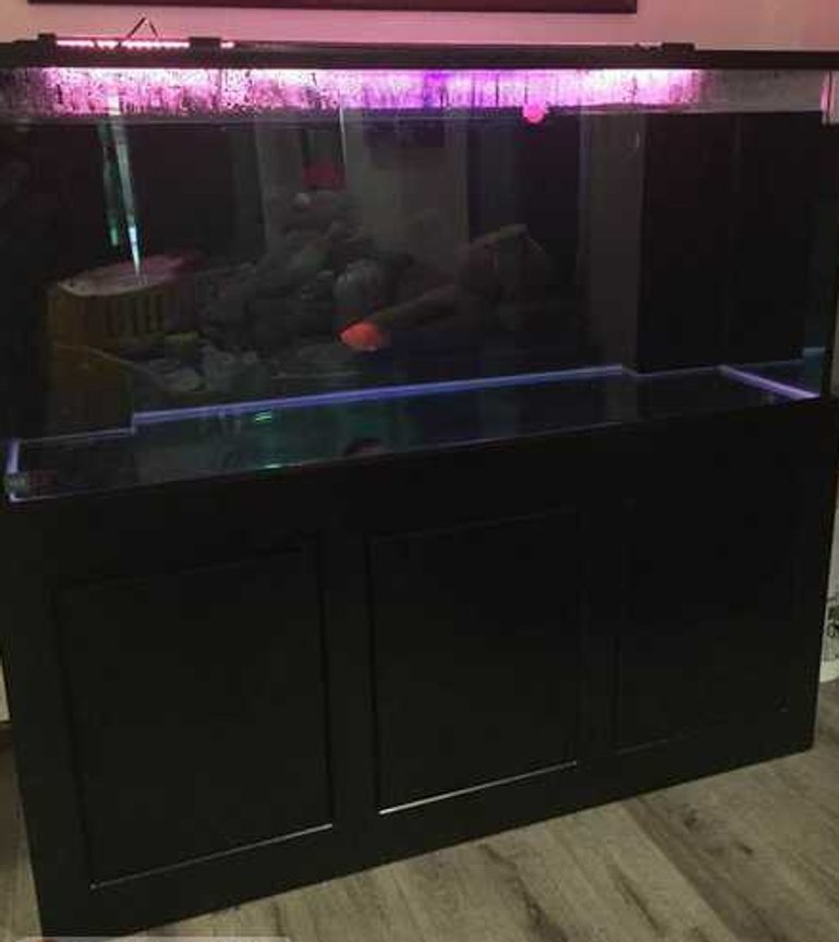 280 gallons freshwater fish tank (mostly fish and non-living decorations) - 121