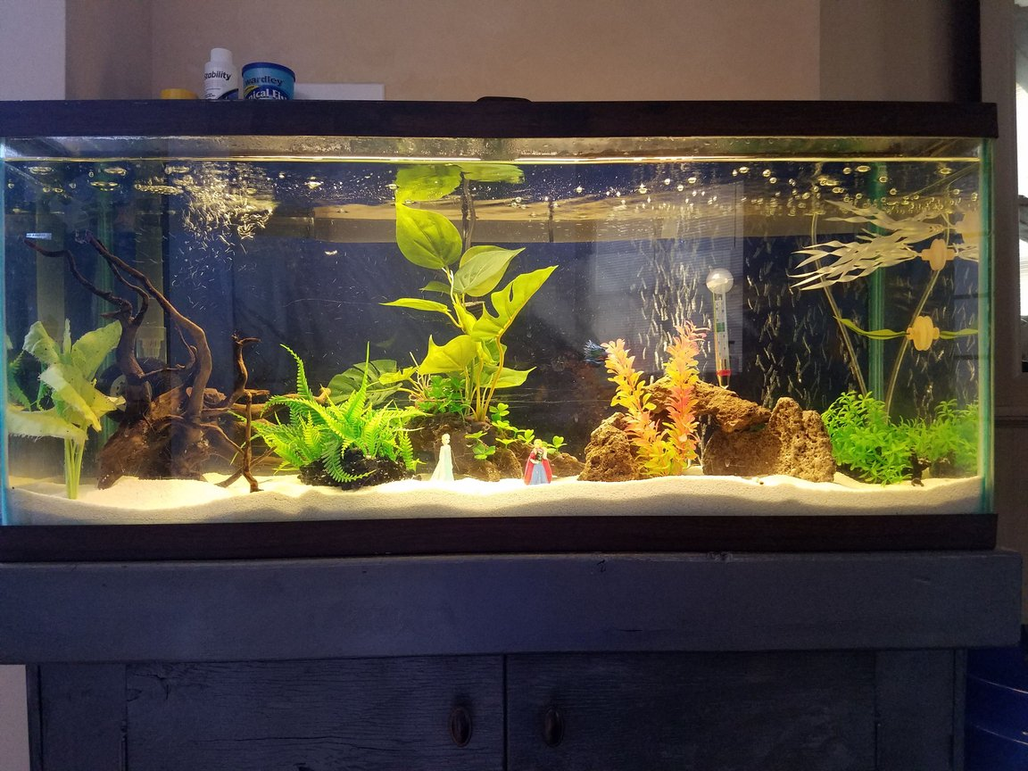 30 gallons freshwater fish tank (mostly fish and non-living decorations) - Our first aquarium. Currently homes a single Crown-tail Betta. Community take to come in future.