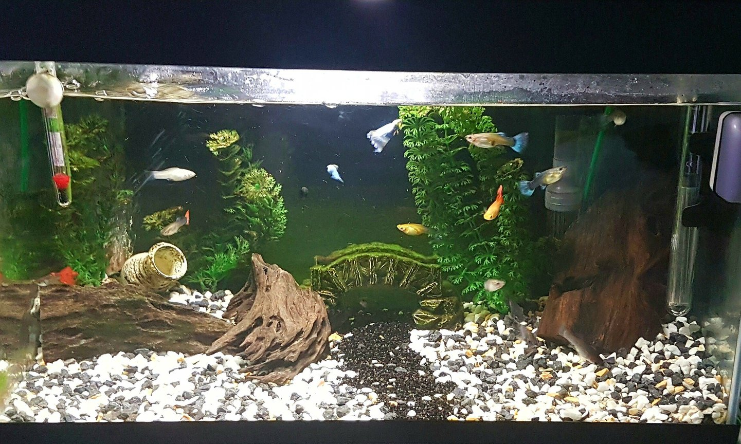 47 gallons freshwater fish tank (mostly fish and non-living decorations) - tried to make my 54L/14.2G tank look pretty with some old plastic plants and some wood and a cool small Bridge. What do you think ?