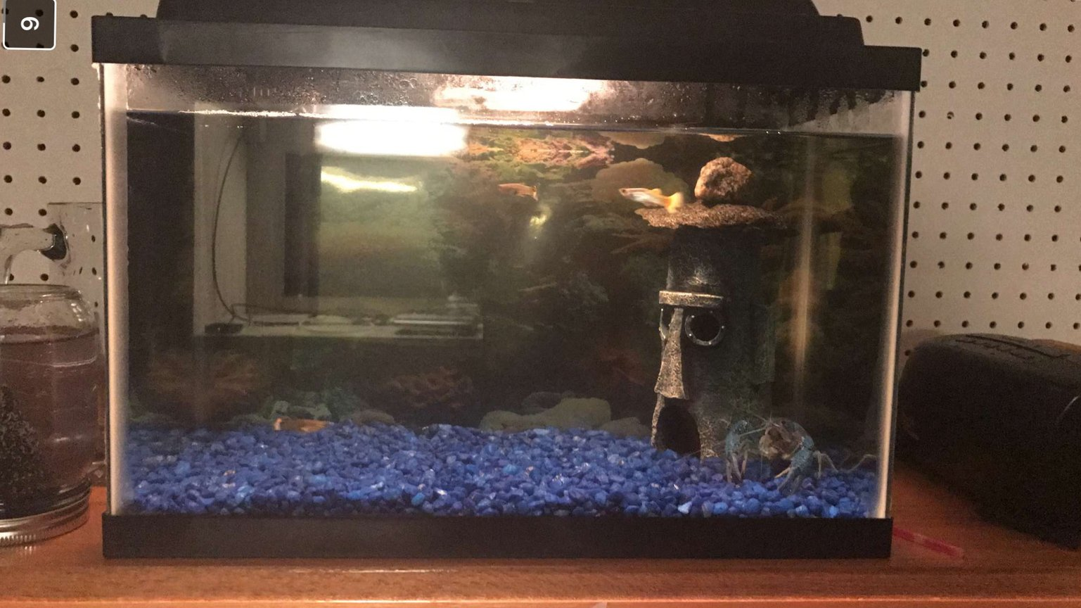 5 gallons freshwater fish tank (mostly fish and non-living decorations) - My tank