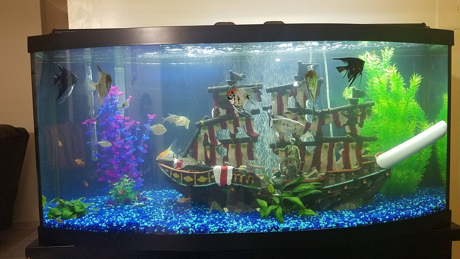 72 gallons freshwater fish tank (mostly fish and non-living decorations) - Three weeks Tank
