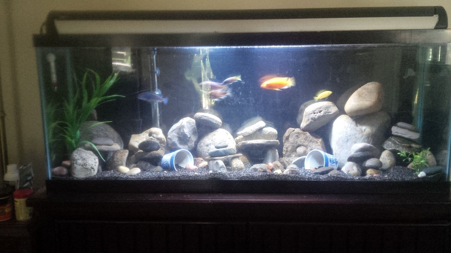 55 gallons freshwater fish tank (mostly fish and non-living decorations) - 55 gallon African cichild tank