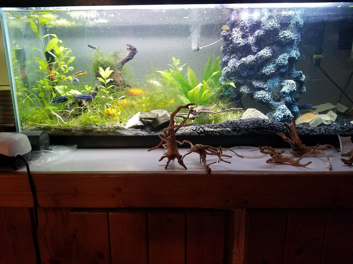 40 gallons freshwater fish tank (mostly fish and non-living decorations) - Hawaiian Tank in all it's glory.