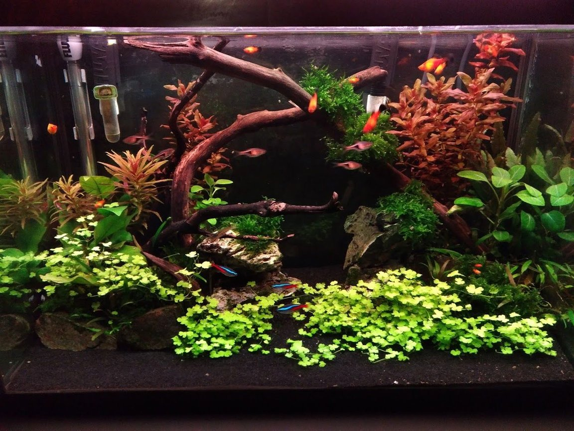 20 gallons freshwater fish tank (mostly fish and non-living decorations) - 6 weeks into new built