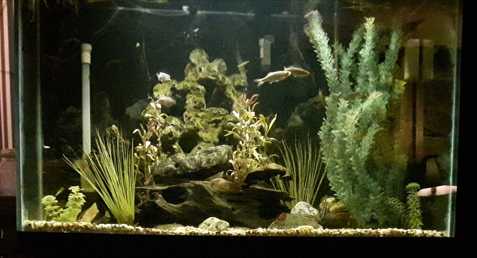 65 gallons freshwater fish tank (mostly fish and non-living decorations) - 65g freshwater
