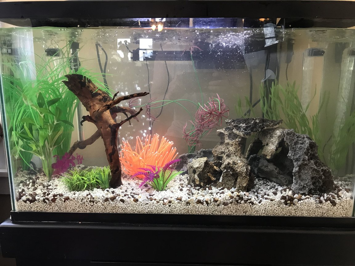 29 gallons freshwater fish tank (mostly fish and non-living decorations) - My first 29 gal. Don't be too harsh about the sea anemone, it's in there for the 1 yr old!