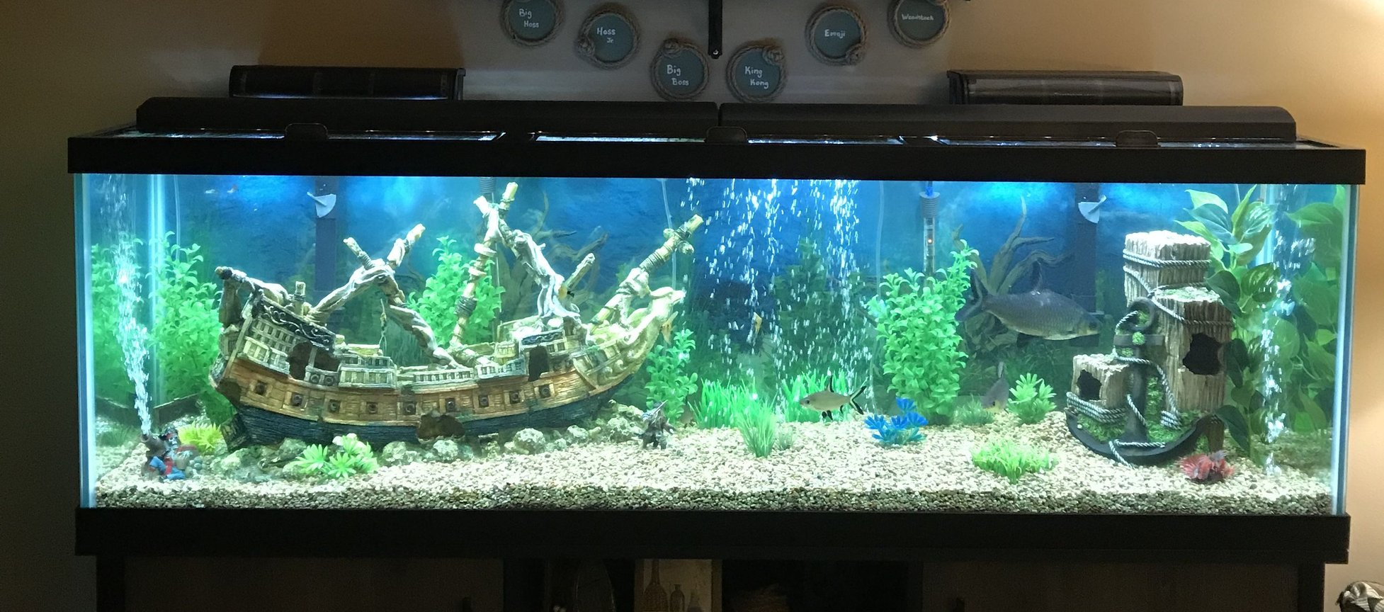 125 gallons freshwater fish tank (mostly fish and non-living decorations) - Beware of Sharks