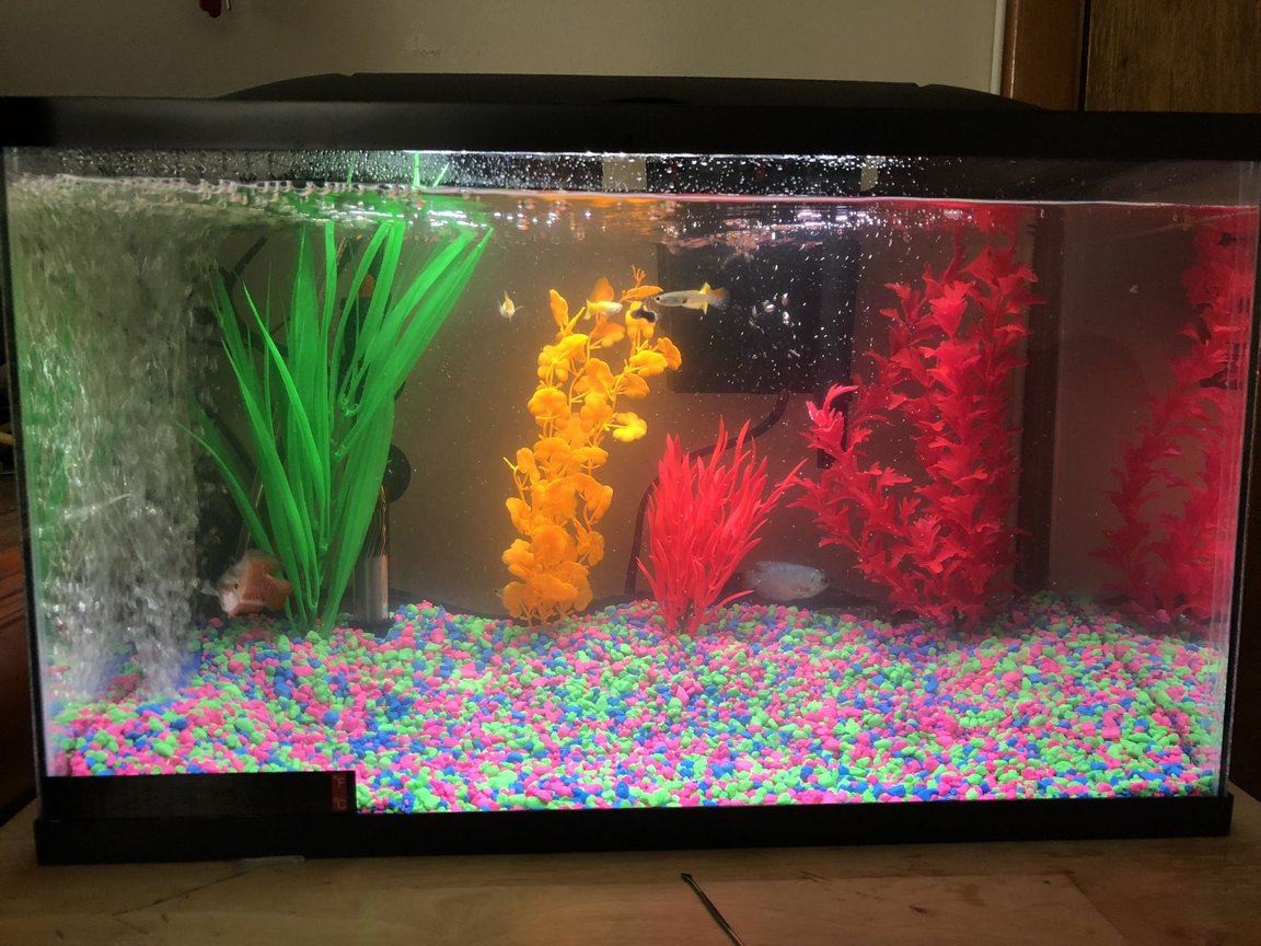 10 gallons freshwater fish tank (mostly fish and non-living decorations) - Tank after 2 days. 10 fish total any input suggested comments welcomed as well