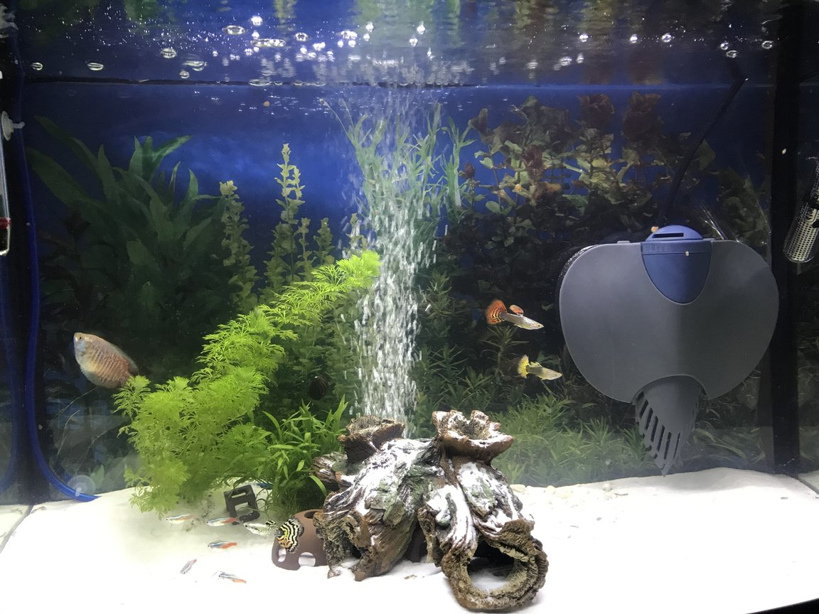20 gallons freshwater fish tank (mostly fish and non-living decorations) - New tank