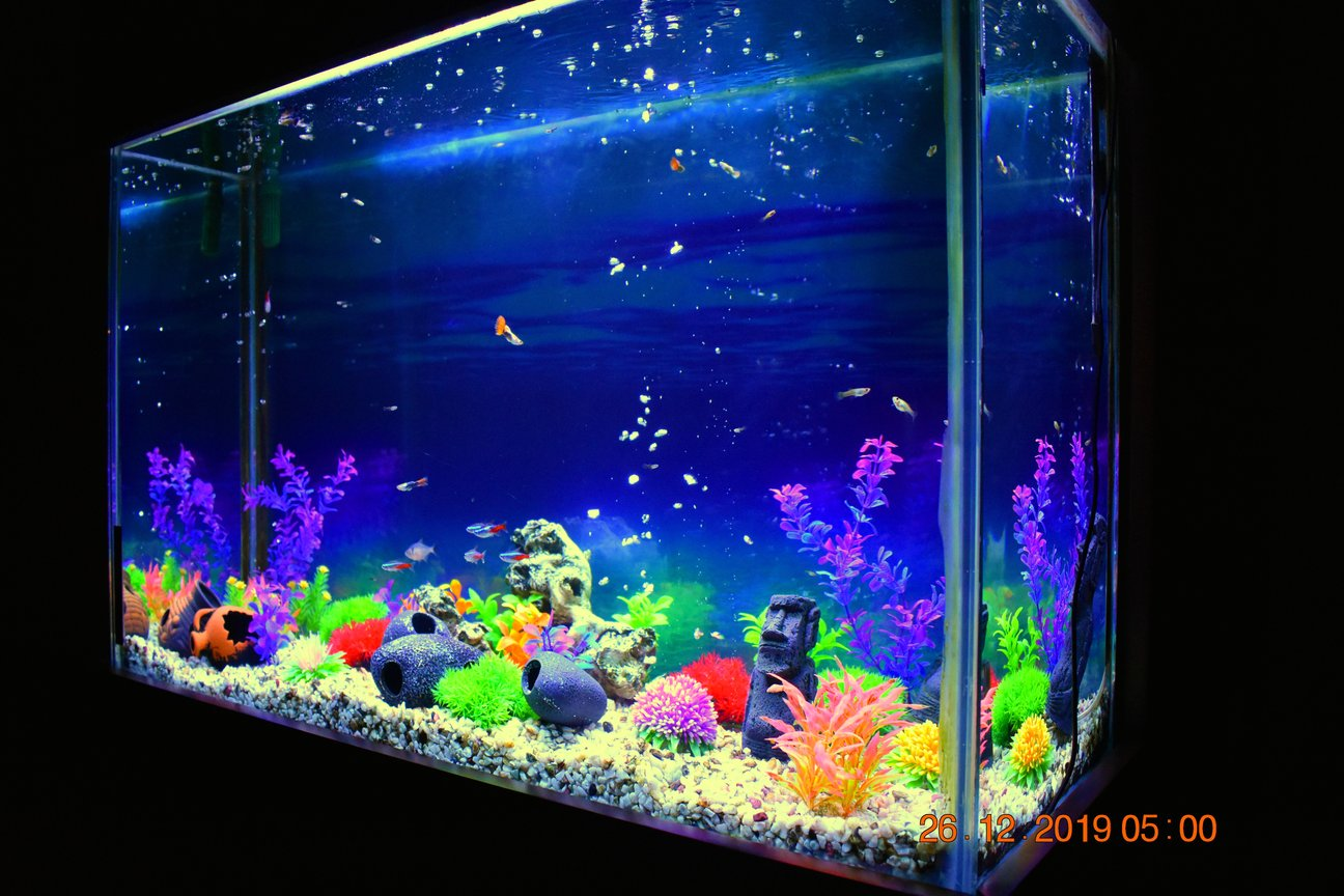 65 gallons freshwater fish tank (mostly fish and non-living decorations) - 100 x 65 x 40 (cm) / ~65 Gallons / Neon Tetra, Guppy, Serpae Tetra, Black Phantom Tetra / Artificial Plants