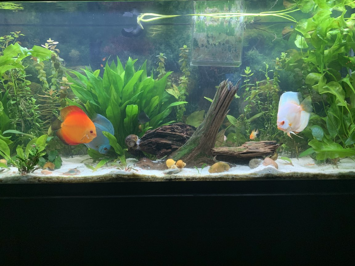 20 gallons freshwater fish tank (mostly fish and non-living decorations) - Discus love