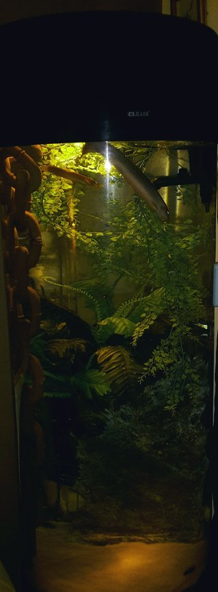 36 gallons freshwater fish tank (mostly fish and non-living decorations) - My beautiful wigglers