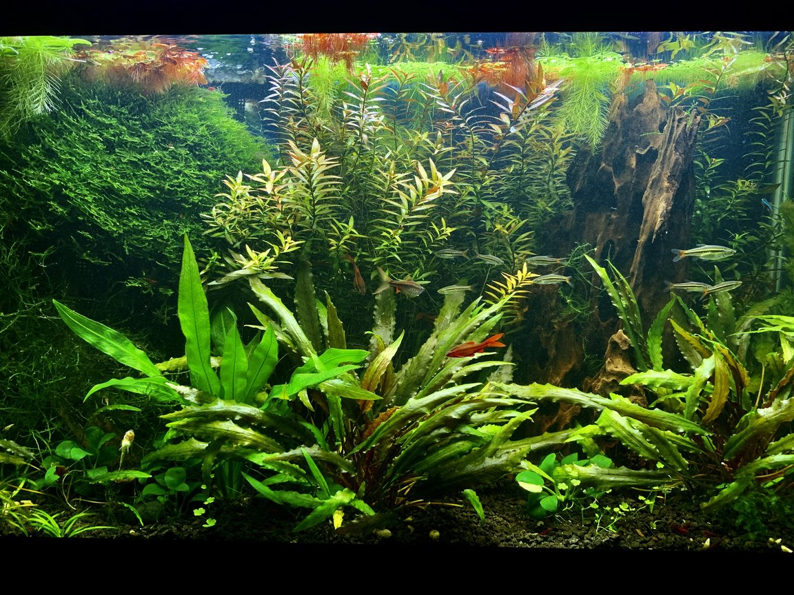 29 gallons freshwater fish tank (mostly fish and non-living decorations) - My 29 gallons fish tank after 2 years.