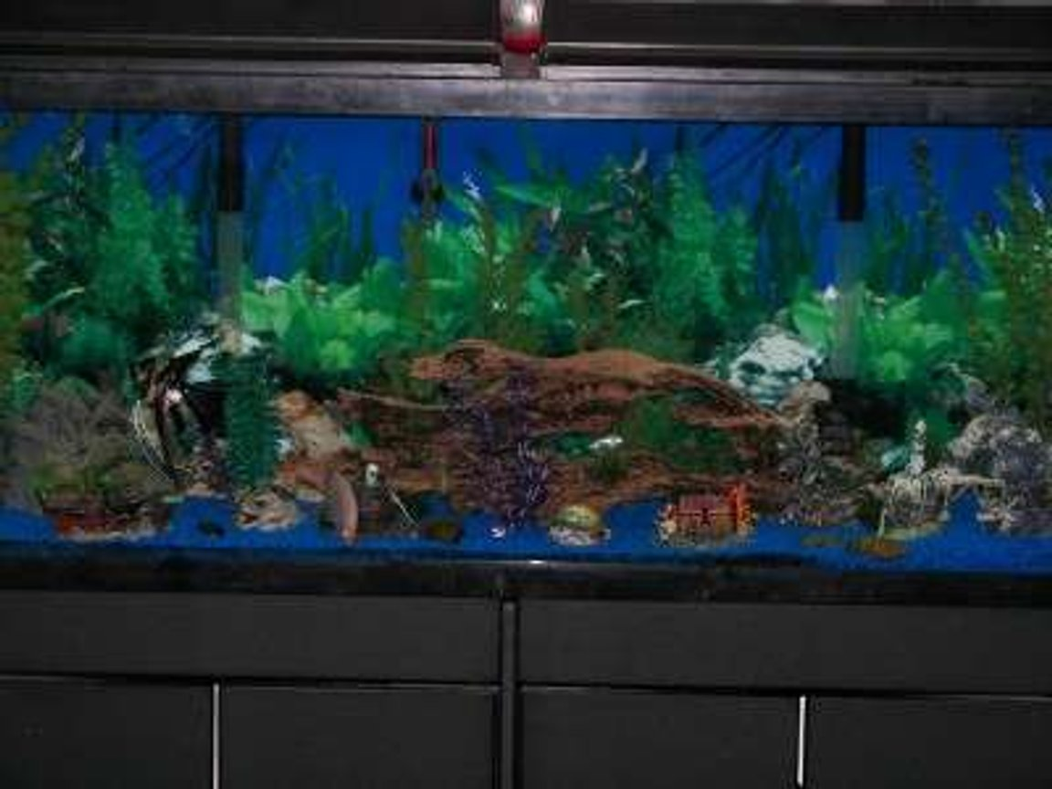 55 gallons freshwater fish tank (mostly fish and non-living decorations) - I run two Regent double filtration systems which filters the tank approximately 7 times a day. I use two kitchen/bath flouresent lights instead of aquarium lights to give the tank a more natural sun lit look. There are four air aquatic orniments to provide the tank with extra air.