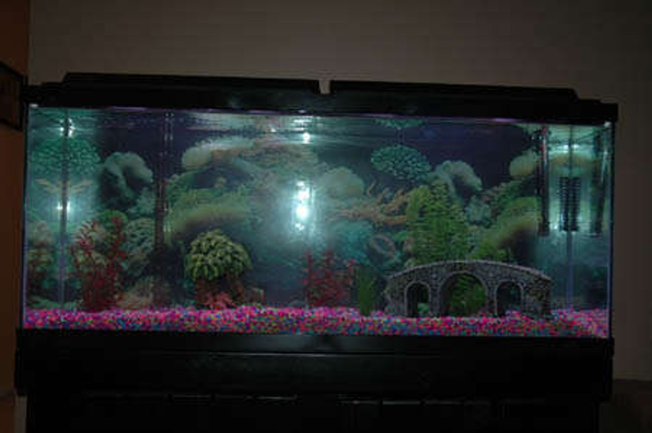 55 gallons freshwater fish tank (mostly fish and non-living decorations) - My first 55-gallon freshwater tank