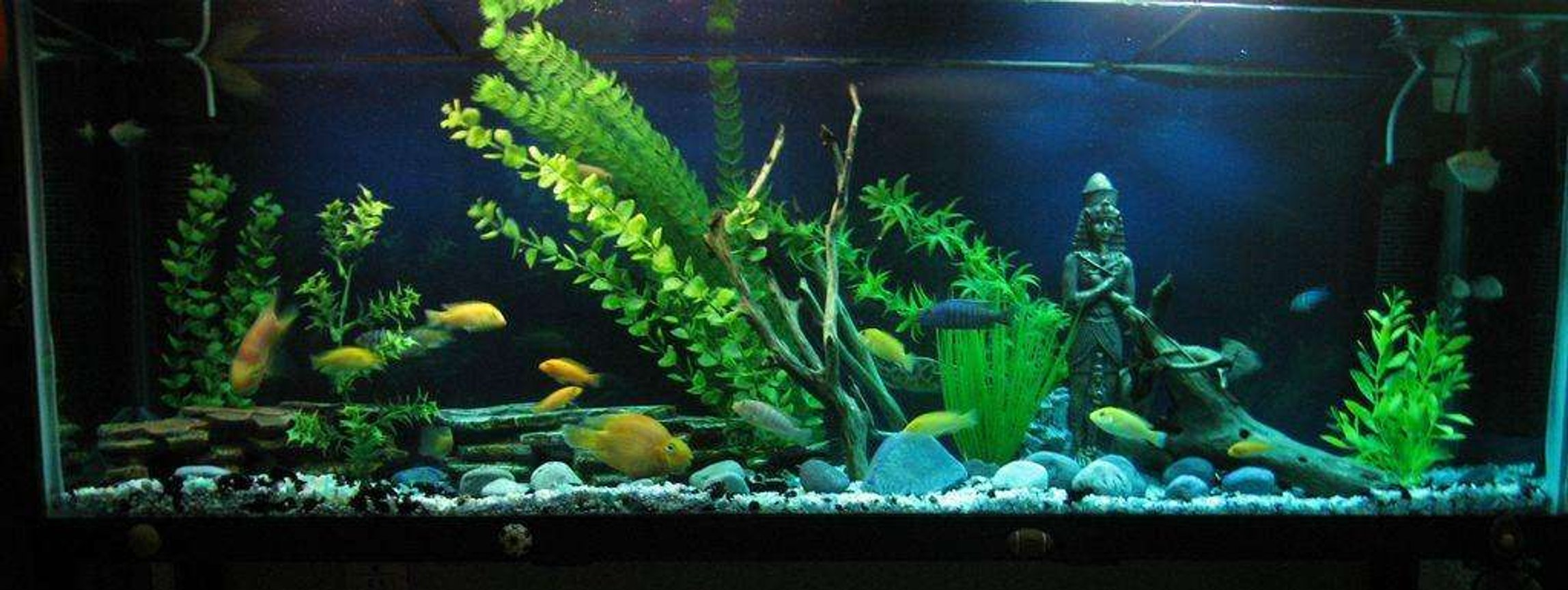 45 gallons freshwater fish tank (mostly fish and non-living decorations) - acuario d 200 l. peces ciclidos.