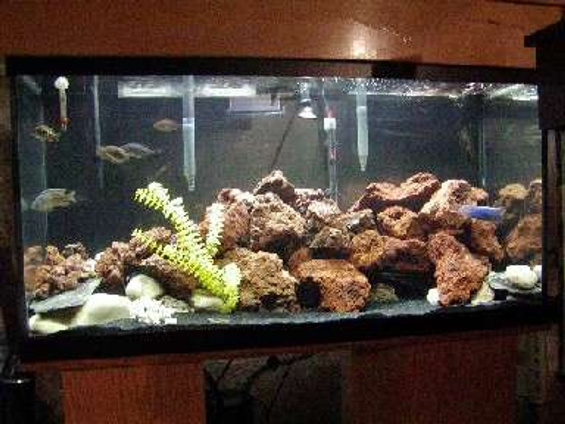 135 gallons freshwater fish tank (mostly fish and non-living decorations) - lava rock and a few haps