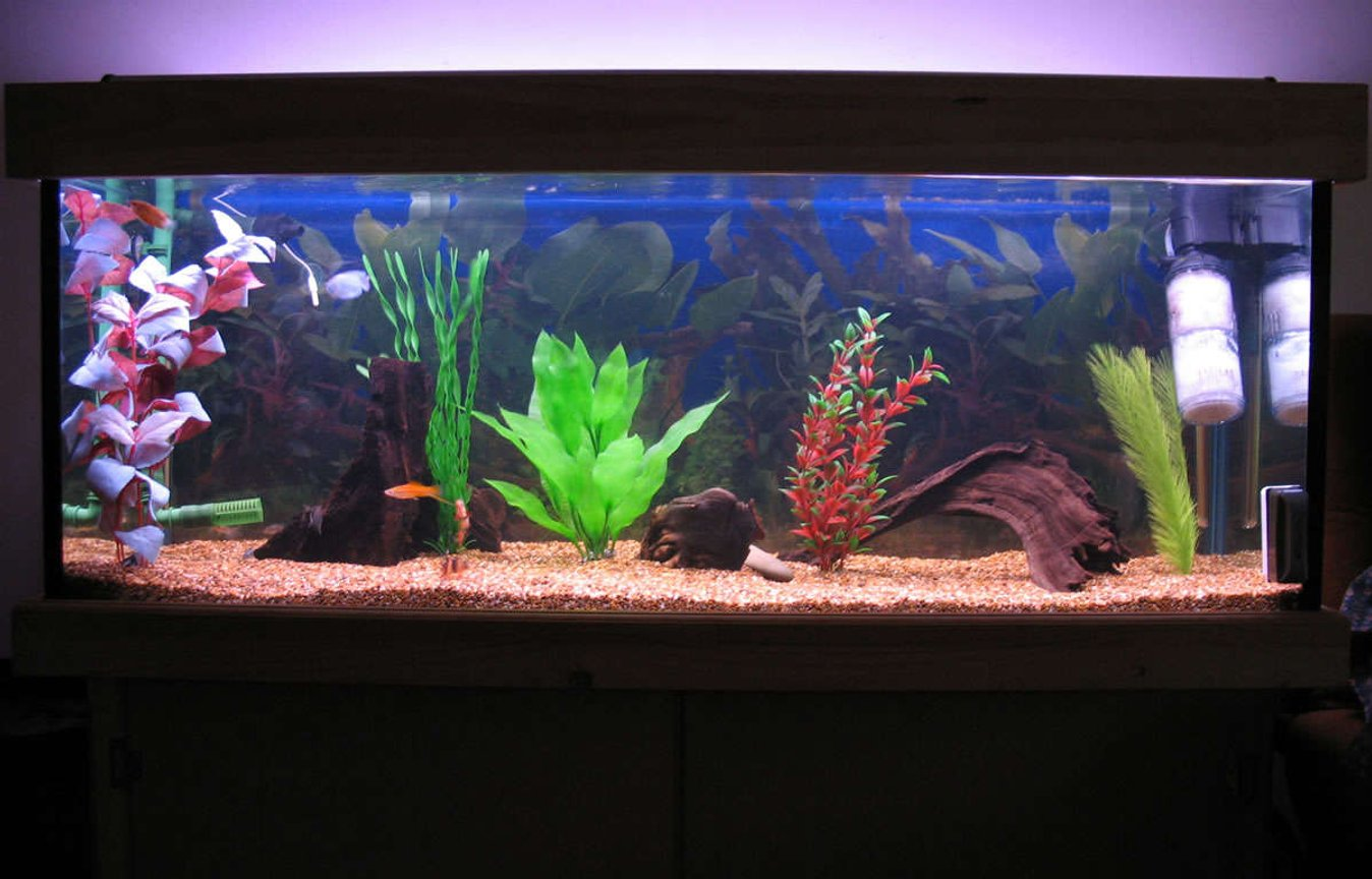 55 gallons freshwater fish tank (mostly fish and non-living decorations) - Full tank Shot