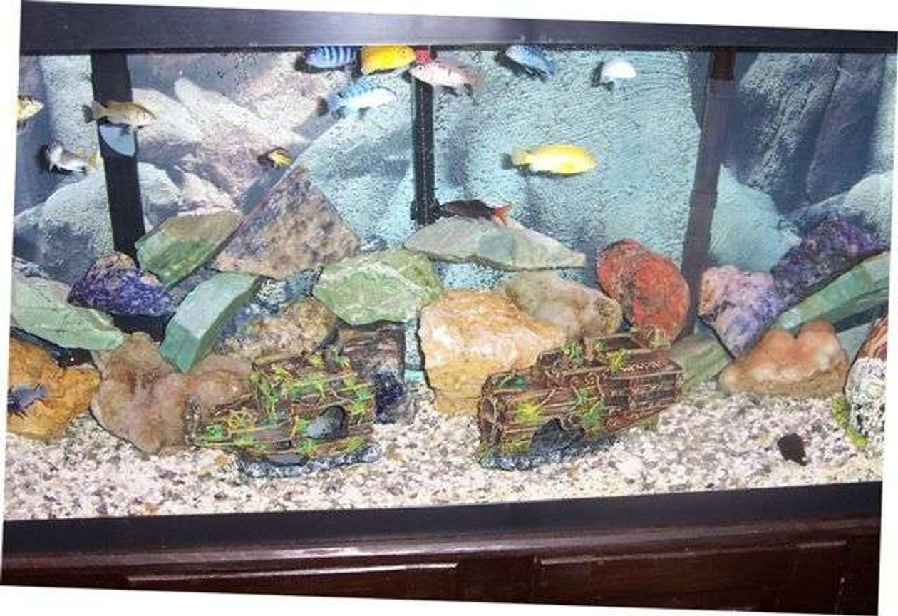 55 gallons freshwater fish tank (mostly fish and non-living decorations) - tank front view