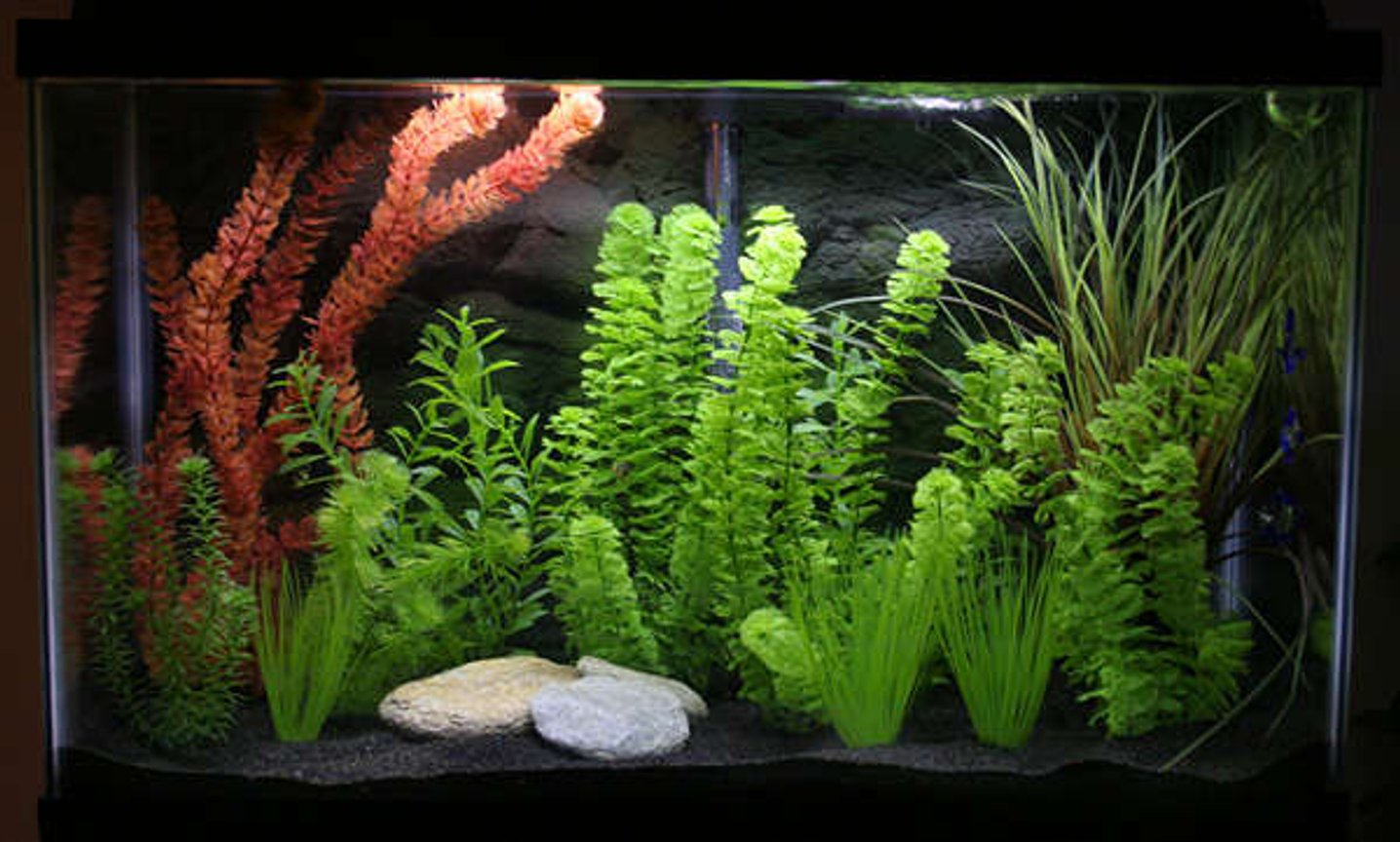 freshwater fish tank (mostly fish and non-living decorations) - 29gallon tank