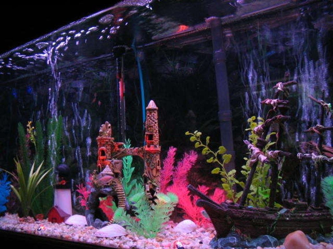 55 gallons freshwater fish tank (mostly fish and non-living decorations) - sunken ship