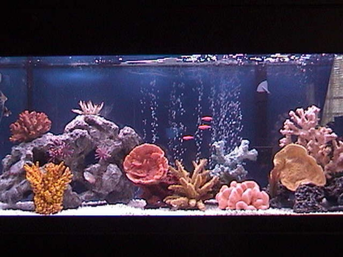 75 gallons freshwater fish tank (mostly fish and non-living decorations) - 48X18X18 All-Glass Aquarium, Marineland Penguin Power Filter 350 BIO-wheel, Dual Lighting Coralife 50/50 40watt and Aqua-Glo 18,000k 40watt, Heater (Brand Unknown), 45lbs White Spectra Stone