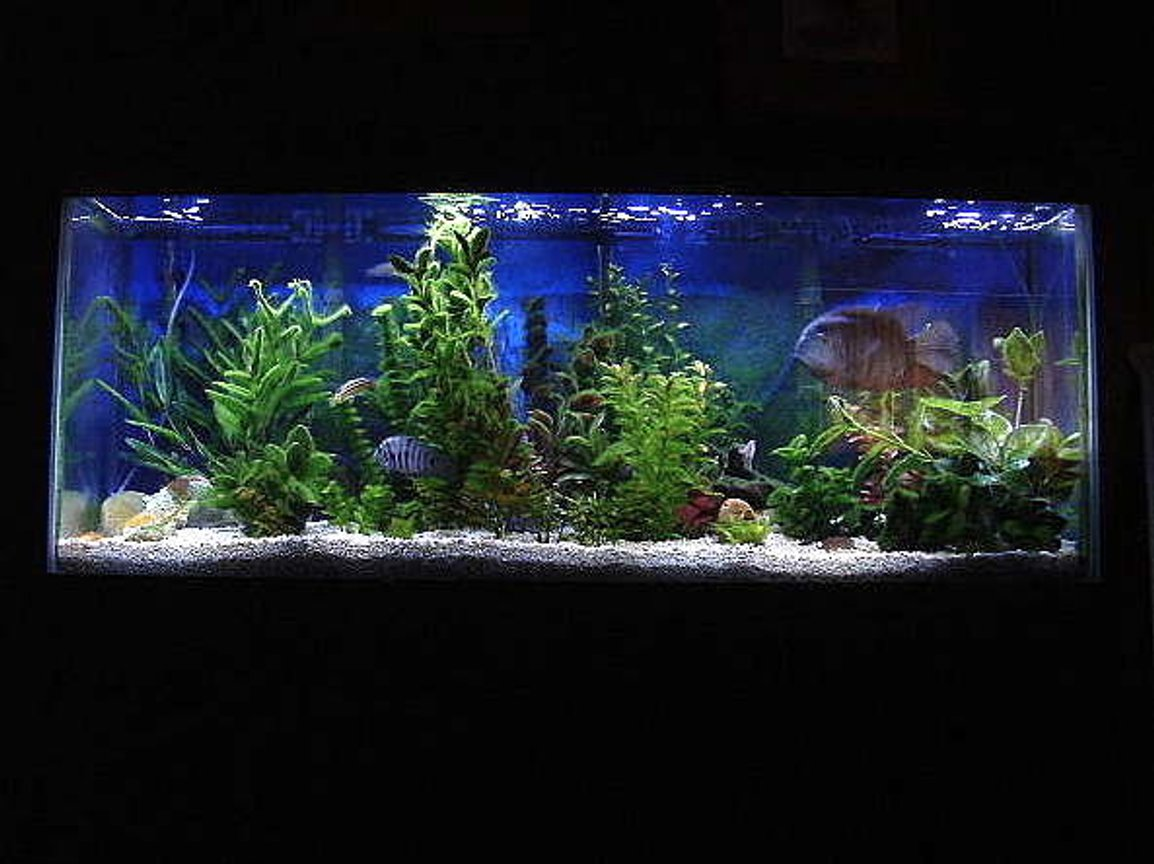 55 gallons freshwater fish tank (mostly fish and non-living decorations) - 10 year old, 55 Gallon, New World Cichlid set up with two Whisper #5 Power Filters; 40 watt Actinic & 40 watt 50/50 Standard Fl. Lighting; 2x 300 watt heaters: Breeding pair of 7 year old Severum, Jack Dempseys, Convicts, Silver Dollars, Yellow Fin Barbs, Tiger Barbs; etc.