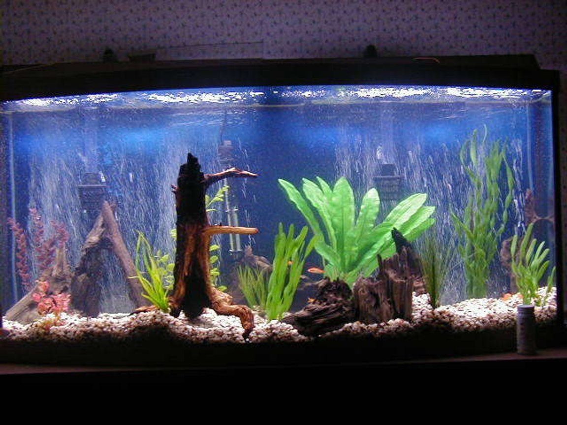 72 gallons freshwater fish tank (mostly fish and non-living decorations) - 72 gallon bowfront