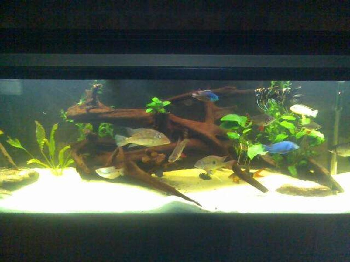 1 gallon freshwater fish tank (mostly fish and non-living decorations) - this is my tank.