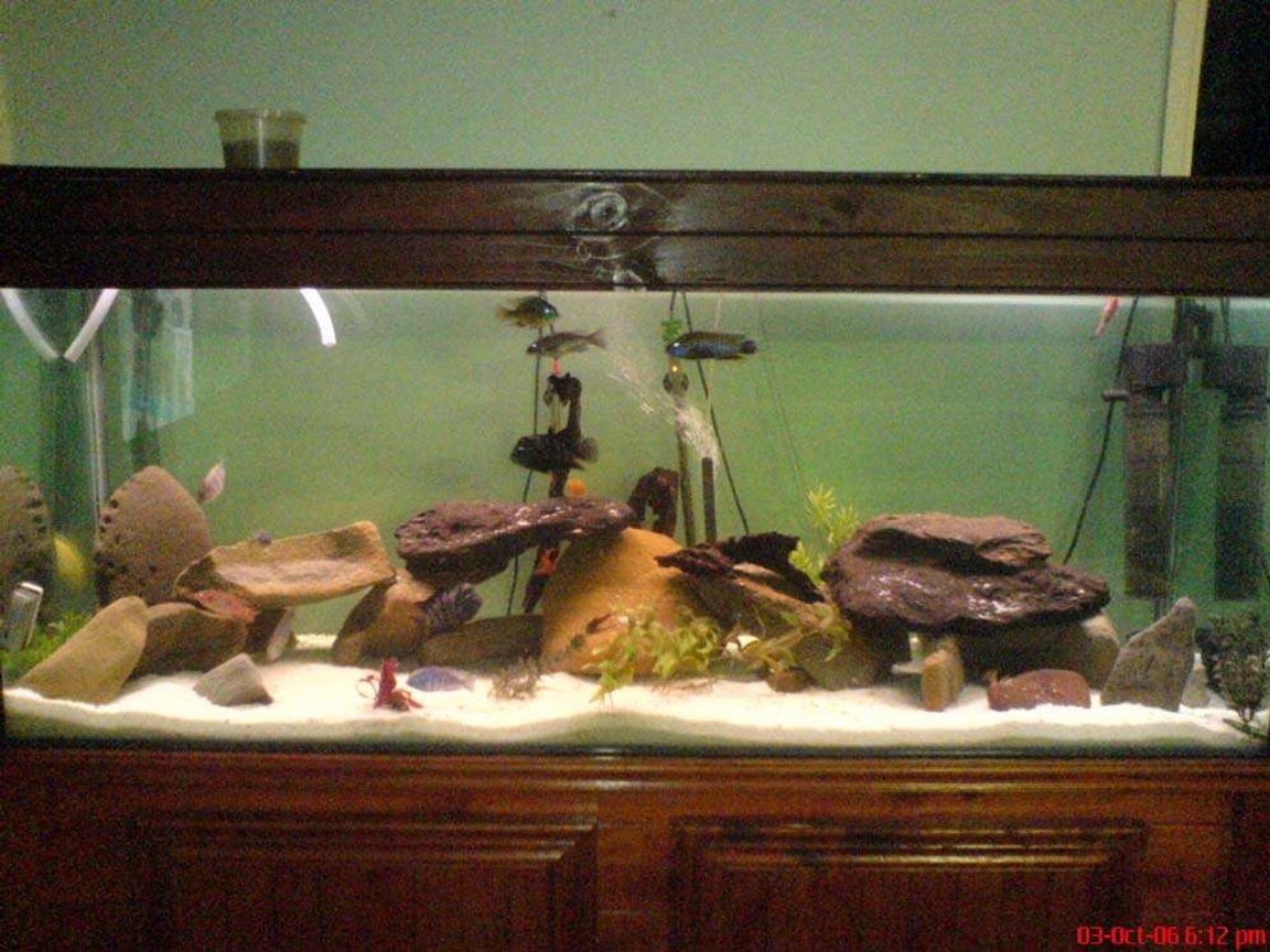 209 gallons freshwater fish tank (mostly fish and non-living decorations) - yeh