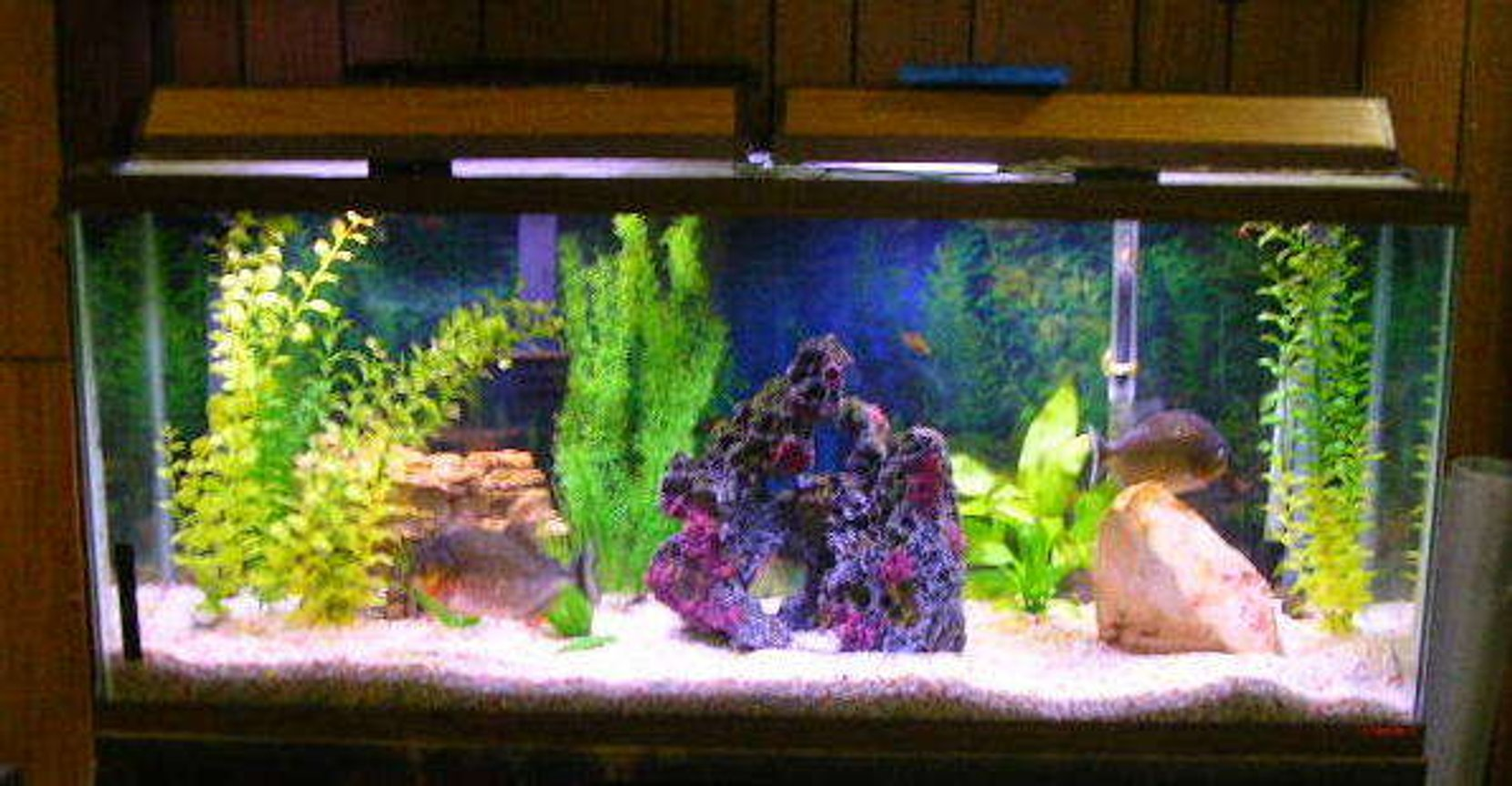 55 gallons freshwater fish tank (mostly fish and non-living decorations) - 55 gallon