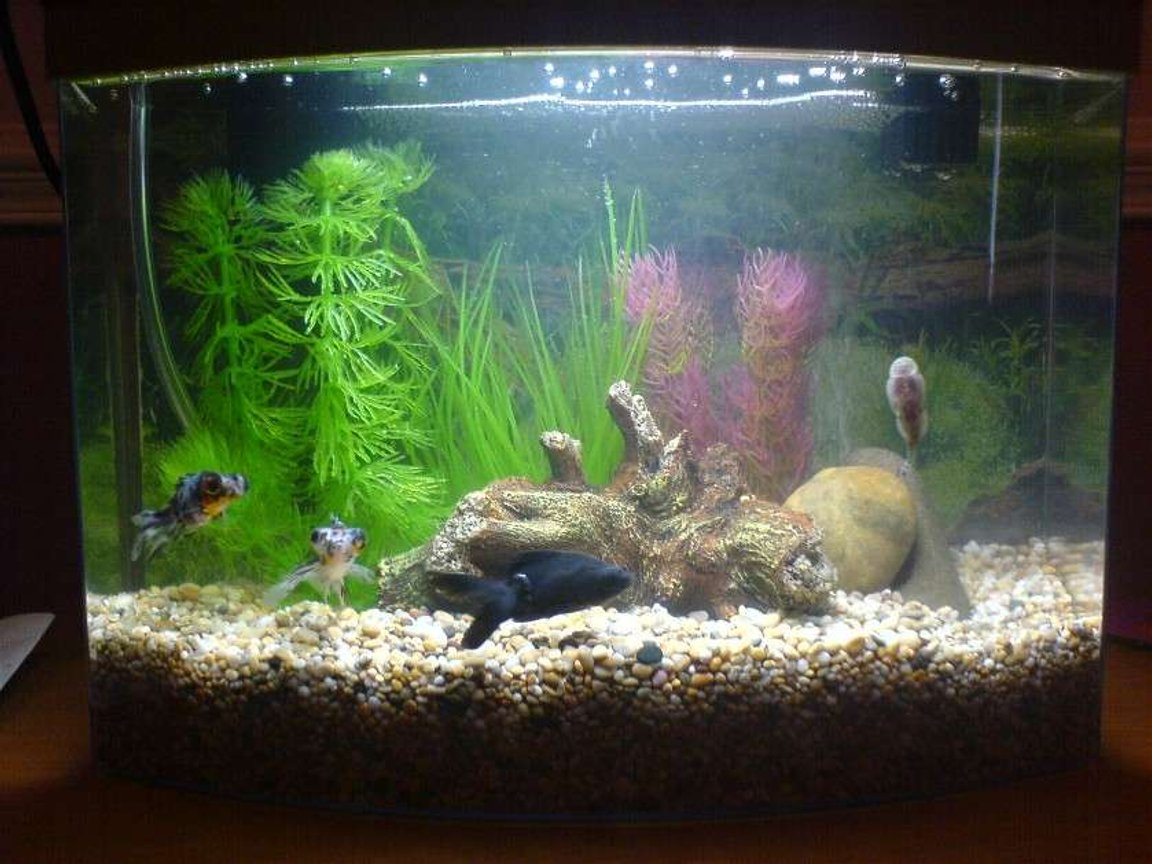3 gallons freshwater fish tank (mostly fish and non-living decorations) - My tank when I first started up!