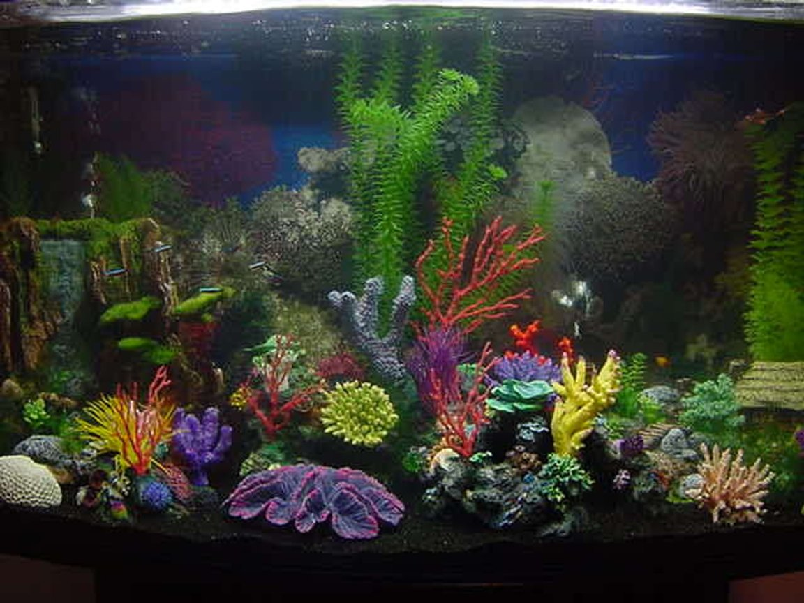 46 gallons freshwater fish tank (mostly fish and non-living decorations) - seaclear 46g bowfront