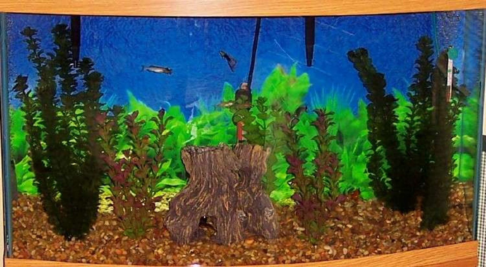 46 gallons freshwater fish tank (mostly fish and non-living decorations) - 46 gal. bow front