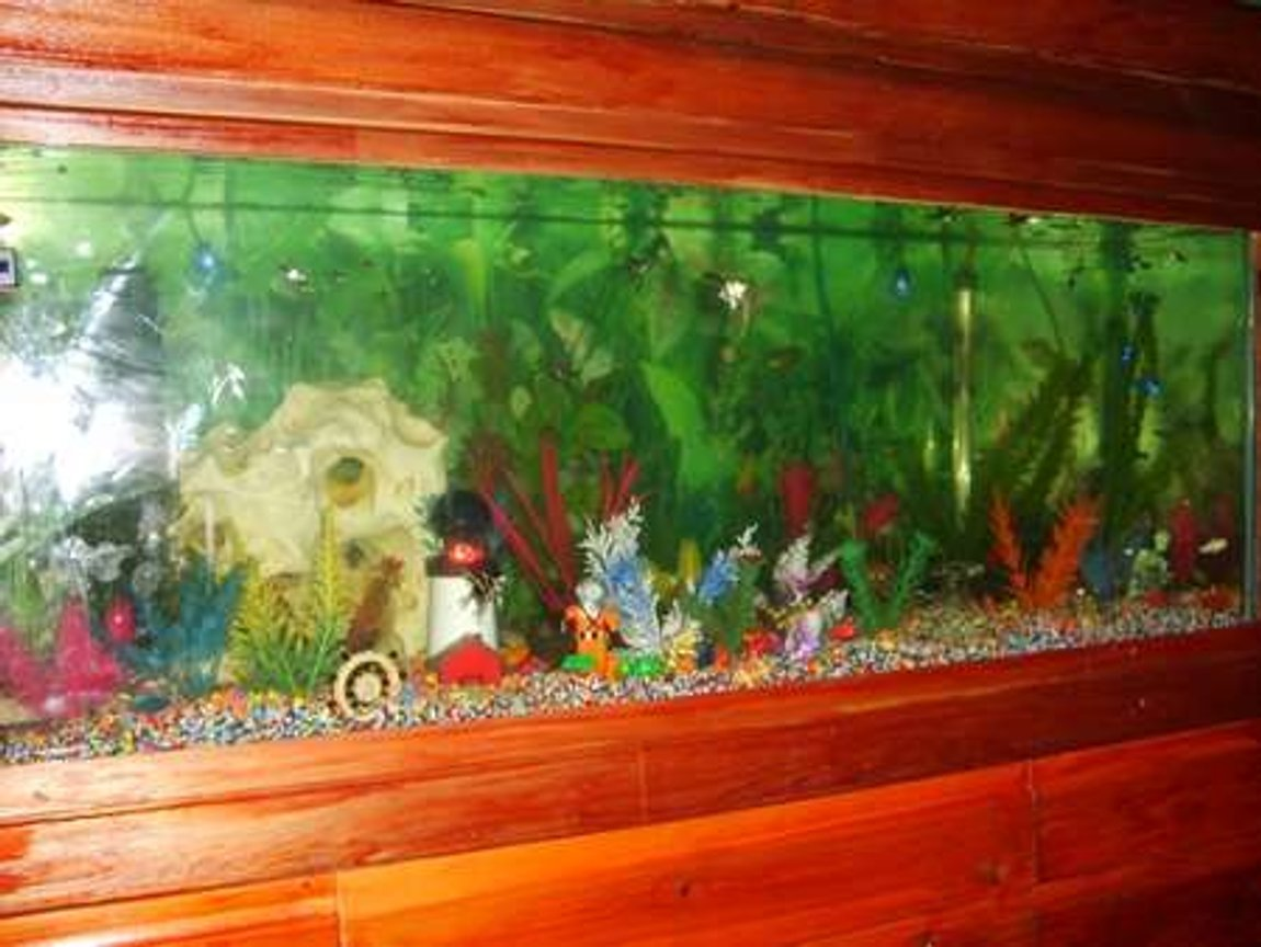 65 gallons freshwater fish tank (mostly fish and non-living decorations) - My 4ft tropical fish tank!!!!