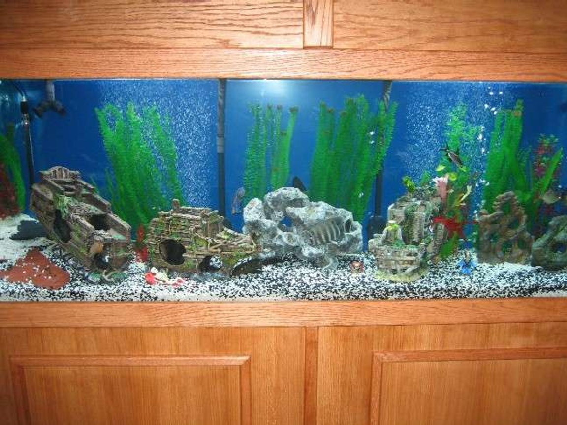320 gallons freshwater fish tank (mostly fish and non-living decorations) - Large tank