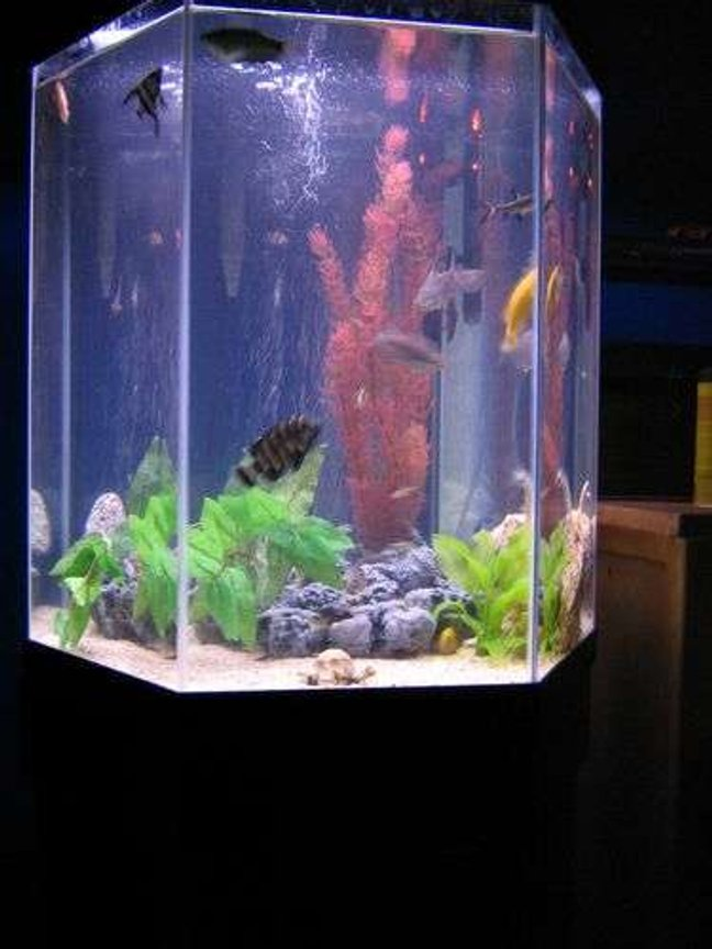 35 gallons freshwater fish tank (mostly fish and non-living decorations) - VERY BAD PICTURE NEW ONE SOON