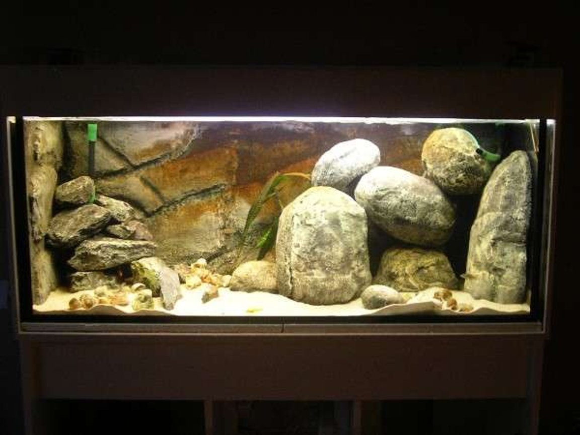 65 gallons freshwater fish tank (mostly fish and non-living decorations) - Tanganyika nr two, DIY, hollow rocks.