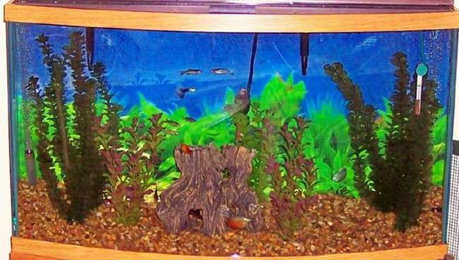 46 gallons freshwater fish tank (mostly fish and non-living decorations) - 46 gal. tank