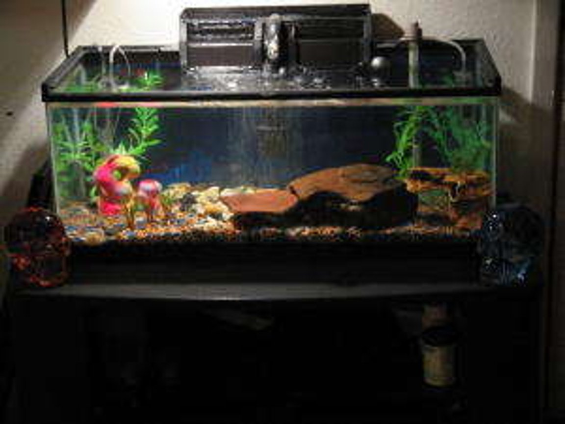 55 gallons freshwater fish tank (mostly fish and non-living decorations) - CURRENT SET UP