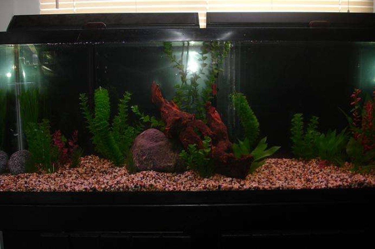 55 gallons freshwater fish tank (mostly fish and non-living decorations) - My 55 gallon tank before having fish in it.