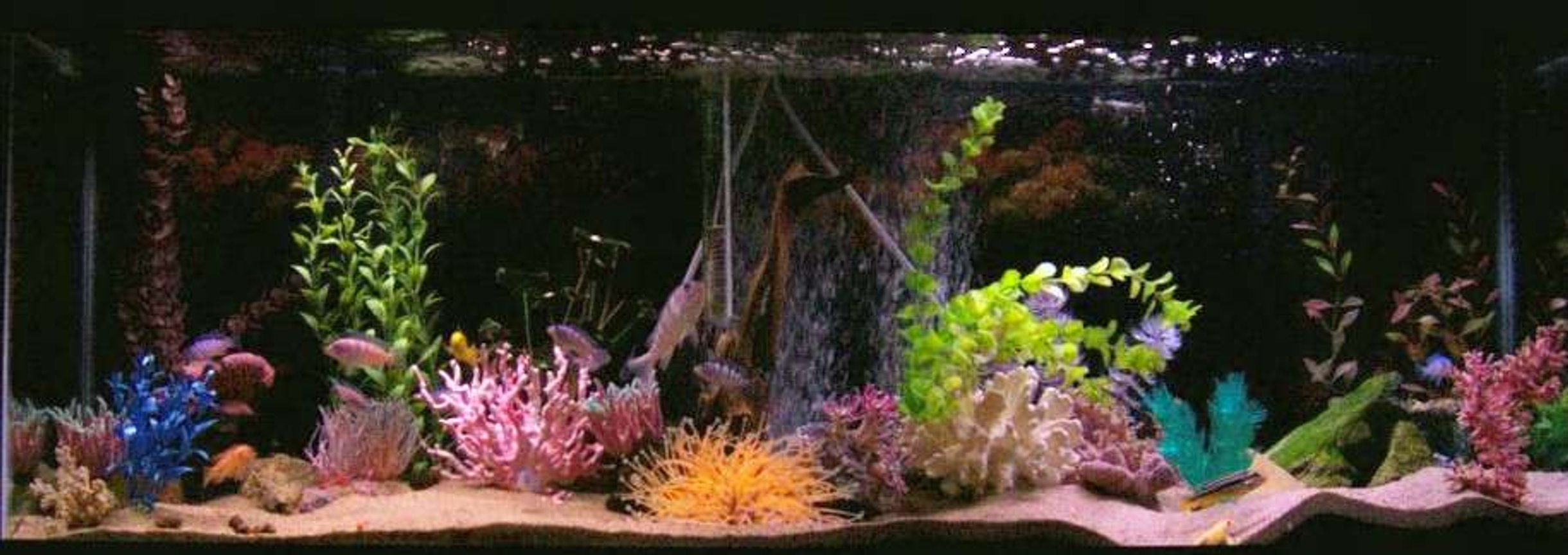 55 gallons freshwater fish tank (mostly fish and non-living decorations) - love my tank!