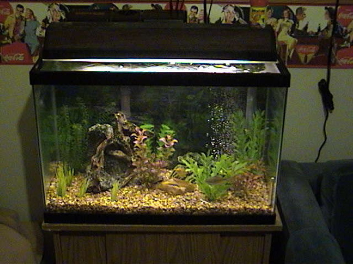 20 gallons freshwater fish tank (mostly fish and non-living decorations) - Full View